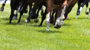 Cheltenham races day trip 2020
