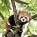 Edinburgh Zoo or Highland Wildlife Park