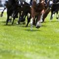 Bath AA | Race Days