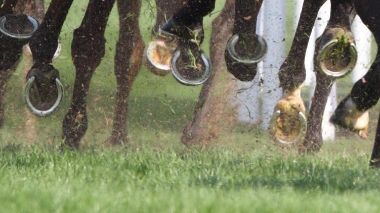 Southwell Horse Racing   Derby & Notts