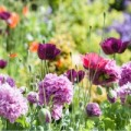 Royal Horticultural Society (RHS) & National Trust Discount