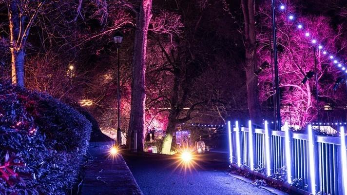 Wondrous Woods Light Trail