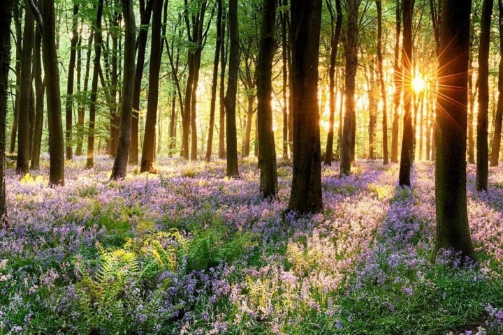 Woodland in spring with flowers blooming