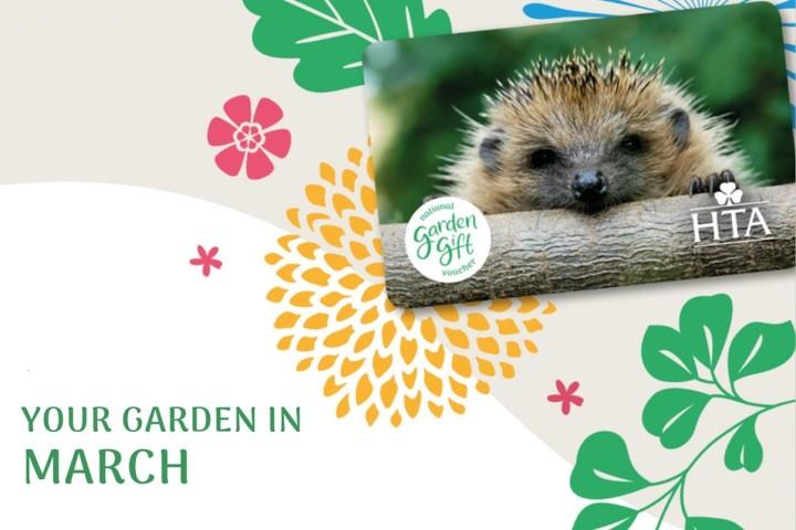 February Garden Newsletter with a hedgehog