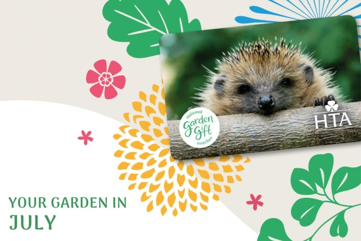 July Garden Newsletter with a hedgehog
