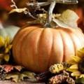 Malvern Autumn Show | Malvern & Worcester