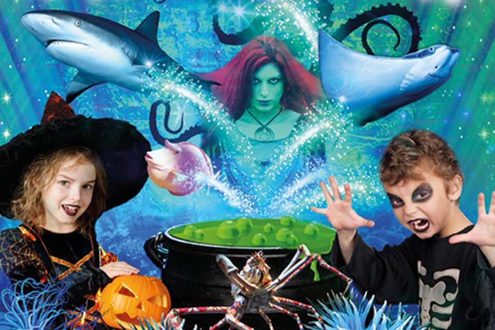 Kids in halloween costumes near a cauldron and scary mermaid at an aqarium
